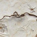 Miriam Louisa Simons: Twig Wonderbox, detail
