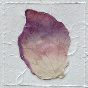miriam louisa simons: Farfalle, detail