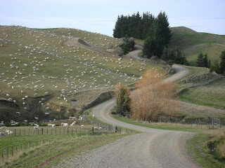 Sheep farming, Central Otago, New Zealand
